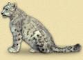 Img_snowleopard
